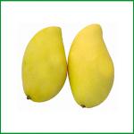黄色マンゴ